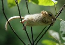 фото мышки